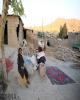 توزیع انواع کنسرو، آب معدنی و نان بسته ای بین زلزله زدگان
