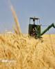 کاهش ۱.۸ درصدی ضایعات کمباین در مزارع گندم استان زنجان