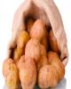 ممنوعیت صادرات سیب زمینی، رب گوجه و خوراک دام و طیور ابلاغ شد