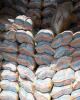 برنج های وارداتی از گمرکات ترخیص میشود