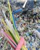 اعمال ممنوعیتهای جدید محیط زیستی در انگلیس از سال آینده
