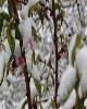 اعتبار سرمازدگی باغات به علت محدودیت منابع کشور اختصاص نیافته است