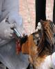 جزییات اجرای طرح واکسیناسیون فوق حاد پرندگان اعلام شد