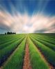 پیشنهادهای هواشناسی کشاورزی برای هته آخر مرداد