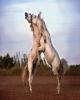 مبارزه اسبهای وحشی در عکس روز نشنال جئوگرافیک +عکس