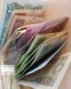 کاهش نرخ رسمی 23 ارز در آخرین روز تیرماه