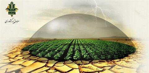 تحقق ۹۸ درصدی برنامه بیمه طیور توسط صندوق بیمه کشاورزی