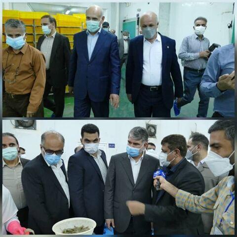 بازدید مدیرعامل بانک کشاوری از طرح فرآوری آبزیان در استان بوشهر