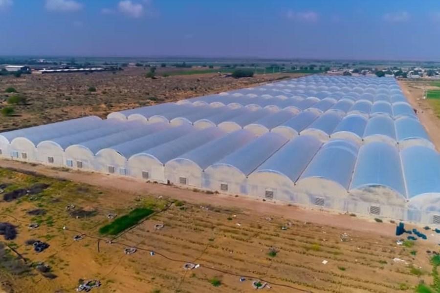 حمایت ۱۰۹ میلیاردی بانک کشاورزی از راهاندازی گلخانه سبزی و صیفی
