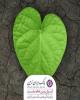 رونمایی از ربات محیط زیستی بانک ایران زمین