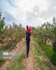 روند رو به رشد شوری خاک در اراضی کشاورزی