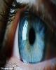 ویزیت رایگان بیش از 1000 بیمار چشمی در بیمارستان طرفه