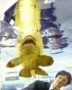 ماهی شگفتانگیز با بدنی از جنس طلای ۲۴ عیار/ تصاویر