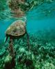 اختصاص ۱۰ میلیارد دلار برای حفظ اقیانوسهای جهان