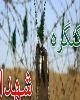 کنگره ۳۰۰۰ شهید ایلام فرصتی مناسب برای تبیین نقش استان در دفاع مقدس است