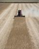 کشاورزان آمریکایی ۱۴ میلیارد دلار کمک مالی دریافت کردند