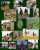 ایجاد ۴۵۰۰۰ کسب و کار پایدار جدید در مناطق روستایی و عشایری