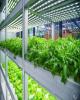 رشد ۲۰۰ درصدی توسعه گلخانه ها/اختصاص تسهیلات به مناطق محروم