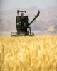 تغییرات قیمت انواع محصولات کشاورزی در فصل تابستان
