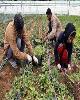تسهیلات اشتغال روستایی هرچه سریعتر تعیین تکلیف شود