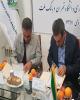 همکاری صندوق پژوهش دانشگاه تهران با بانک ملت برای حمایت از شرکتهای دانشی