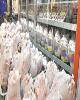 فروش مرغ با قیمت بالاتر از ۱۱،۵۰۰ تومان تخلف است