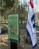 حمایت بانک صادرات ایران از طرح ملی نهضت درختکاری مورد قدردانی قرار گرفت