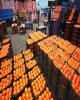 ۷۵۰ تن پرتقال و ۳۵۰ تن سیب برای ایام نوروز در قم ذخیره شده است