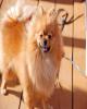 گران ترین و دلرباترین سگهای دنیا (+عکس)