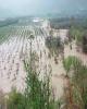 صندوق بیمه کشاورزی 65.5 میلیارد تومان غرامت سیل پرداخت کرد