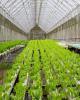 ارزش صادرات محصولات گلخانه ای به یک میلیارد دلار می رسد