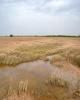 700میلیارد ریال به کشاورزان سیل زده چهار استان پرداخت شد