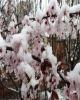 سرمازدگی، 440 میلیارد تومان به باغ ها و مزارع خسارت زد