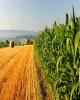 حمایت از رونق اشتغال و افزایش بهره وری با توسعه شهرک های کشاورزی