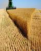 سیلوی ۳۰ هزار تنی  گندم رشتخوار آماده افتتاح است