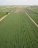 پرداخت ۴۱۱ میلیارد تومان غرامت به کشاورزان