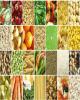 تورم تولیدکننده زراعت، باغداری و دامداری ۴۷.۸ درصد شد