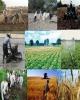 ۲۰ میلیارد تومان تسهیلات اشتغال روستایی در آق قلا پرداخت شد