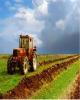 خروج ارزشافزوده تولیدات کشاورزی از کرمانشاه با خامفروشی