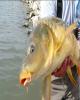 گامی مهم در جهت احیای ذخایر ماهیهای تجاری