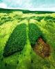 فعالیت صنایع مغایر با استانداردهای محیط زیست متوقف شود