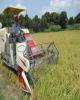 کاشت و برداشت برنج در شمال کشور مکانیزه شد