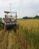 افزایش ۱۰ برابری پلاک گذاری ماشین آلات کشاورزی