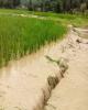آخرین وضعیت پرداخت غرامت سیل به بخش کشاورزی