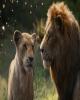 کاهش فروش تابستانه سینما در آمریکا/ «شیر شاه» هم معجزه نکرد