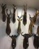 نمایش ۱۰۰ هزار نمونه گیاهی و جانوری در موزه تاریخ طبیعی محیطزیست