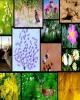 افتتاح مخزن موزه تنوع زیستی با ۱۰۰ هزار نمونه گیاهی و جانوری