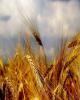 نرخ تورم تولیدکننده زراعی افزایش یافت