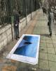 این قهرمان ماندنی است!/ طرح یک پیشنهاد از طرف خانه عکاسان ایران